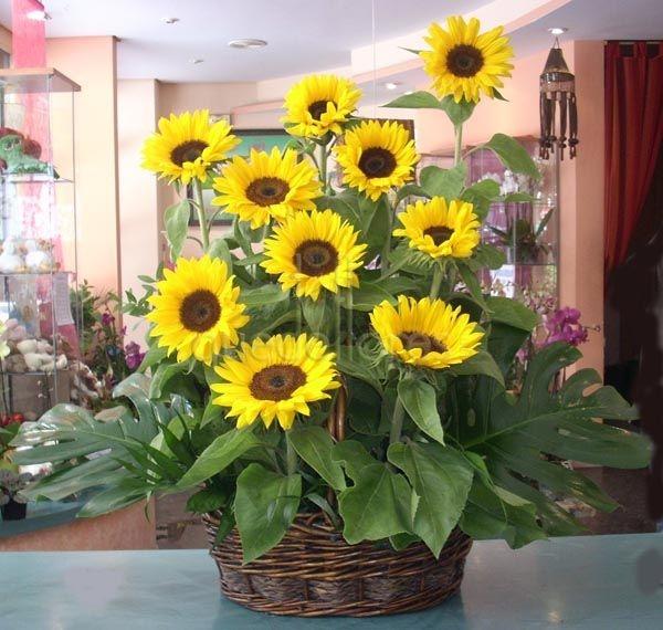 Una cesta de girasoles for Sala girasol