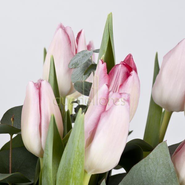 Tulipanes Holandeses El Producto De La Semana