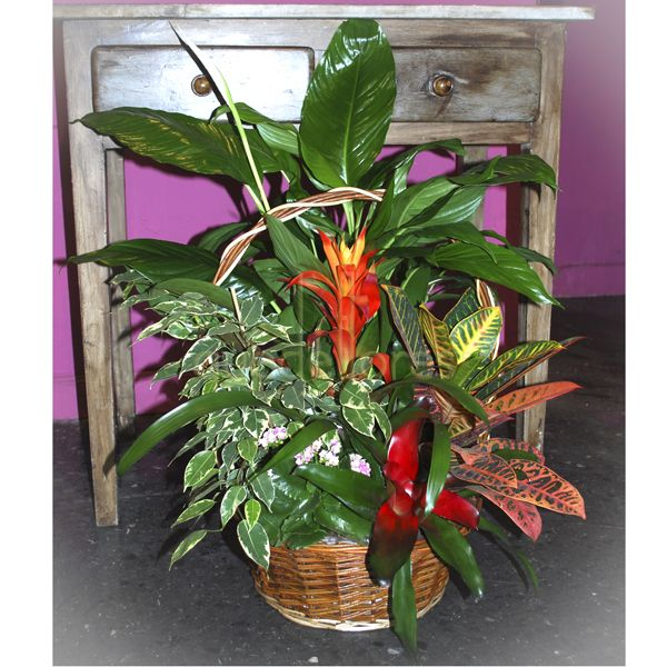 La bromelia una resistente planta de interior for Las plantas de interior