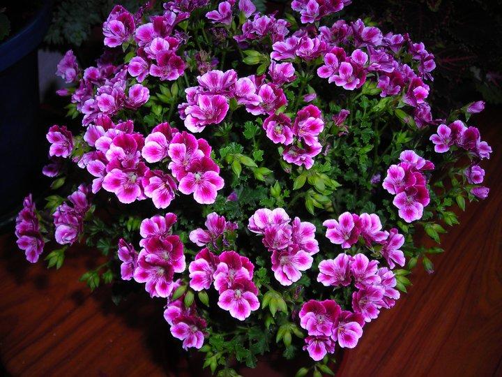 Como cuidar tus plantas en verano - Plantas exterior mucho sol ...