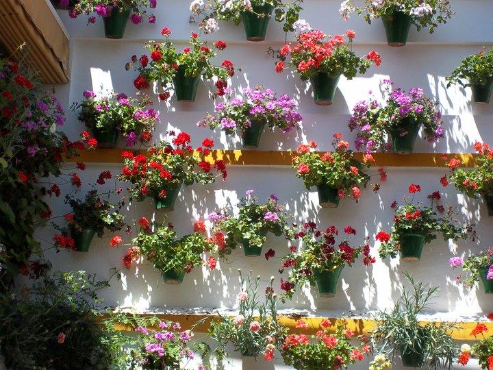 Flores resistentes al calor - Imagenes de patios andaluces ...