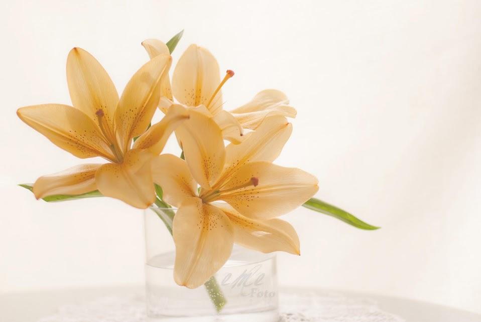 Liliums en vaso