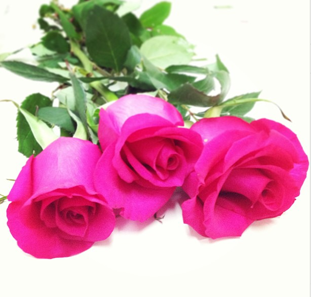 Rosas fucsias