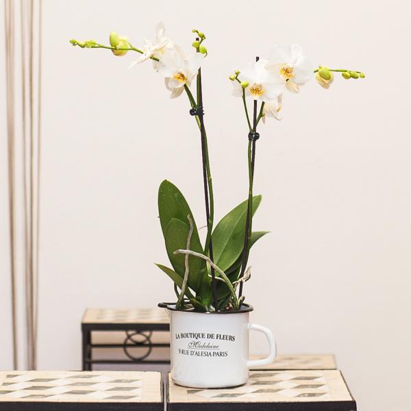 Orquídea blanca en jarrita metálico