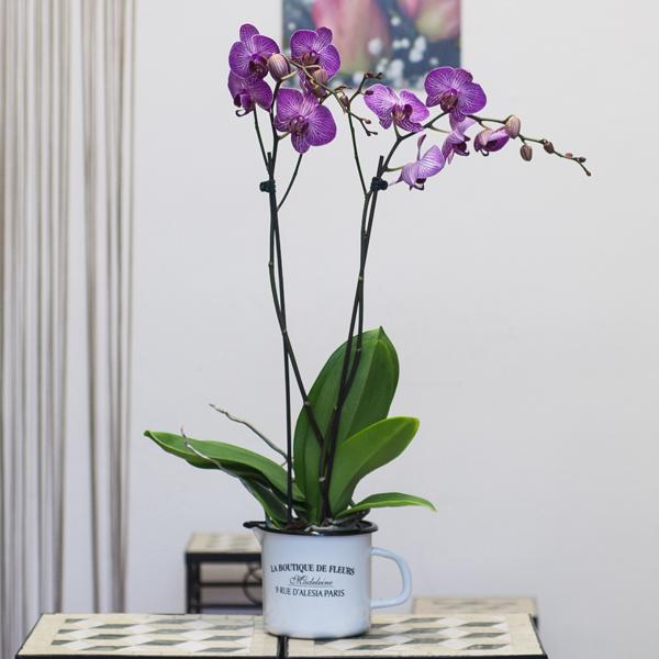 Orquídea rosa en jarrita de cristal