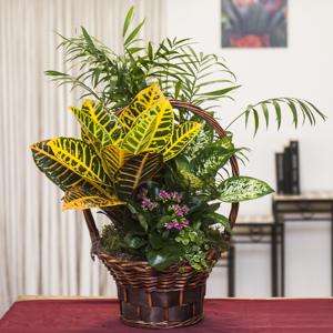 cesta-plantas