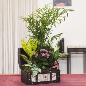 Baúl con plantas de interior
