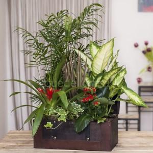 cofre-plantas