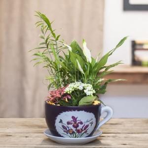 plantas_teapot