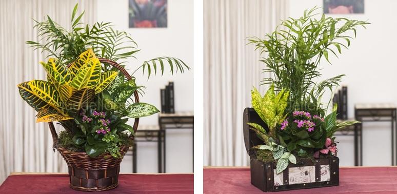 centros y cestas de plantas de interior