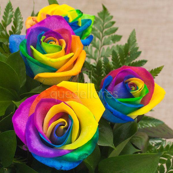 Rosas Rainbow