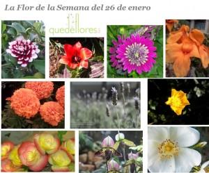 fotografías de flores
