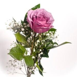 rosa-morada-indiviudal