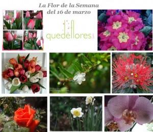 flores la flor de la semana