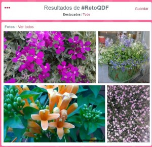 flores twitter