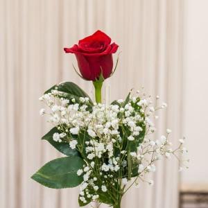 rosa-roja-individual