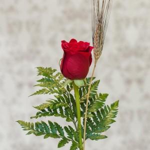 rosa roja sant jordi