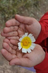 Flor ganadora de la Flor de la SEmana del 18 de mayo, presentada por Carla Vera Huerta.