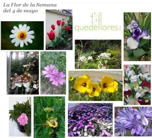 collage la flor de la semana 4 de mayo