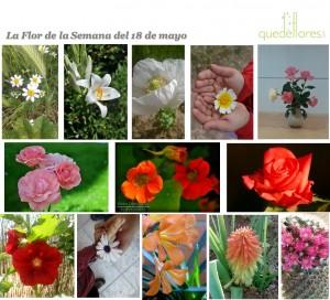 collage la flor de la semana del 18 de mayo