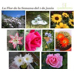 collage la flor de la semana del 1 de junio