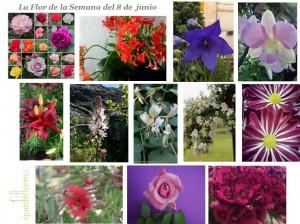 collage la flor de la semana del 8 de junio