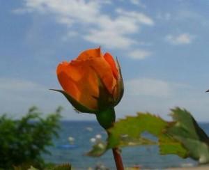 rosa mirando al mar