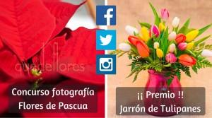 Concurso-fotografiaFlores-de-Pascua