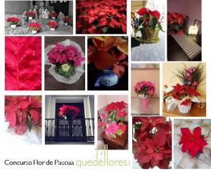 concurso flor de pascua