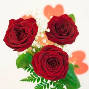 rosas-rojas-3-detalle