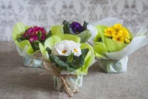 plantas regalo boda