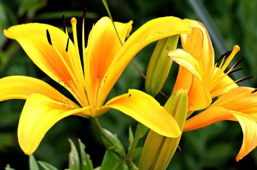 Significado de las plantas por su color