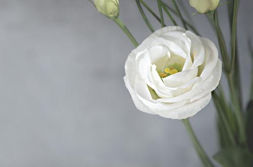 Flores bonitas para regalar