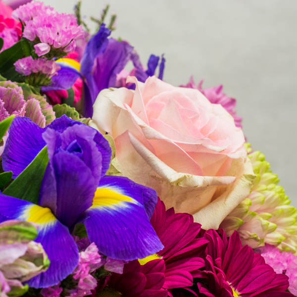 Pink & purple QDF