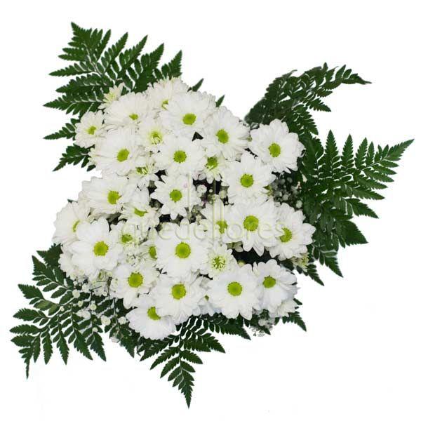 Pin Margaritas-blancas-flores-rosas-flor-jpg-pictures on ...