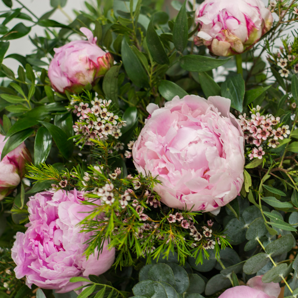 Peonías rosa