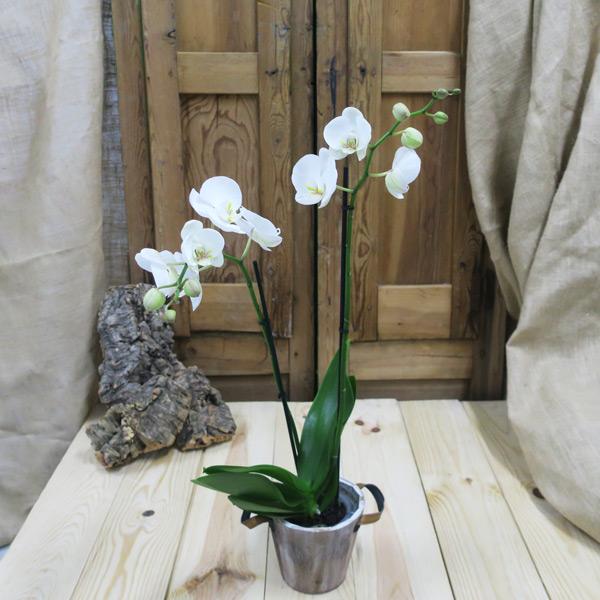 Orquídea en base de Madera