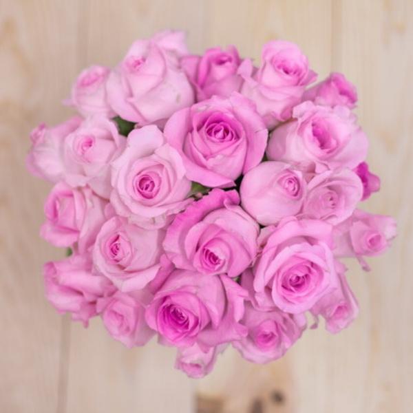 Pink Otello