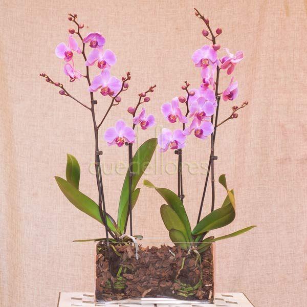 Orquídeas en jardinera de cristal