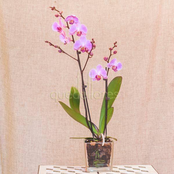 Orquídea rosa claro en cubito de cristal.