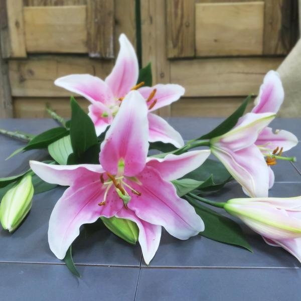 Ramo de Lilium Rosa Oriental