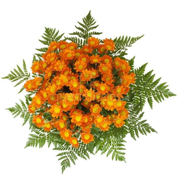 Ramo de margaritas naranjas