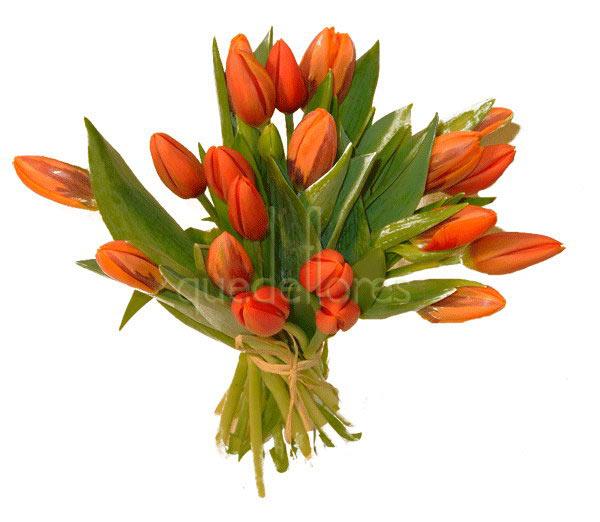 Tulipanes rojos y naranjas