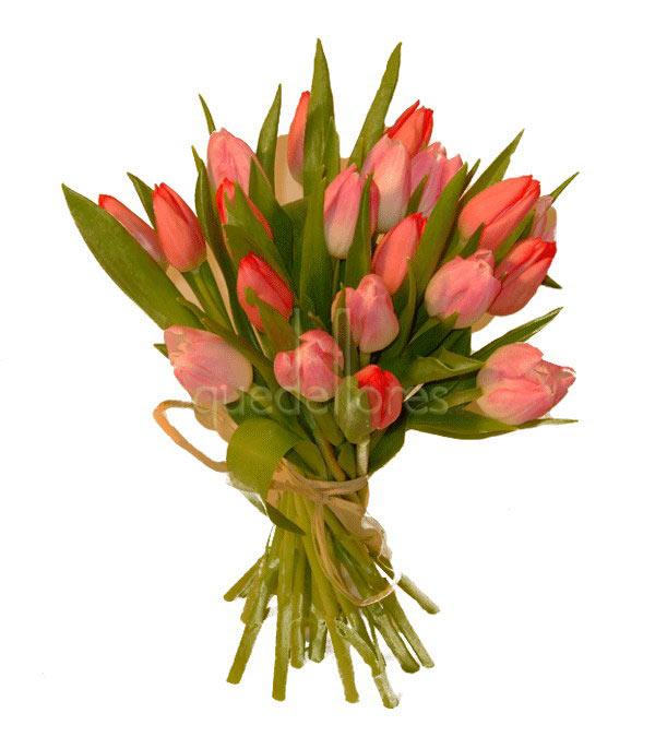 Tulipanes rosas y fucsias