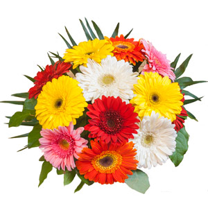 Bouquet de gerberas multicolor