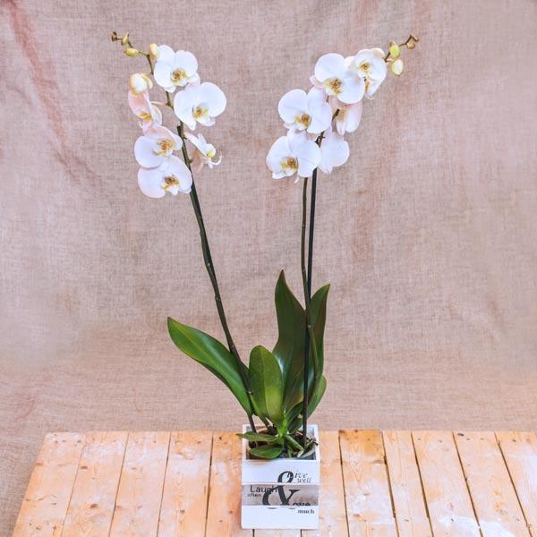 Orquídeas en cubito de madera