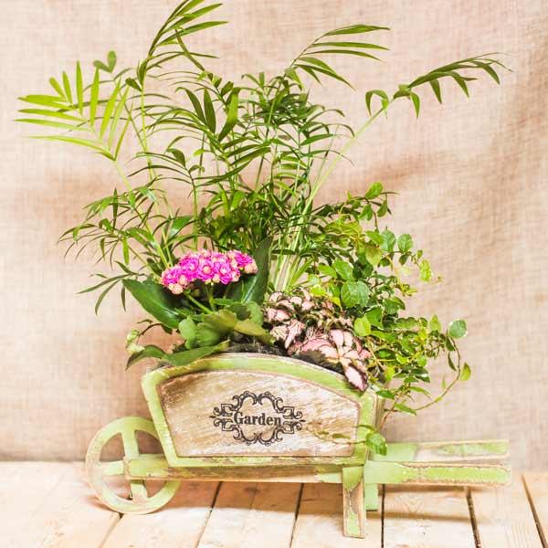 Carretilla de plantas