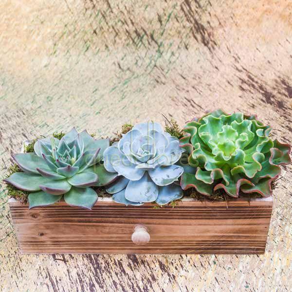 Cajón tres Plantas Crasas