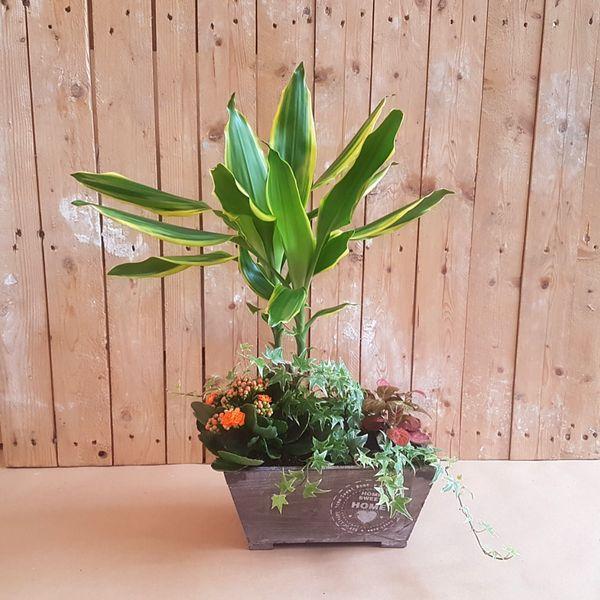 Cajón de plantas