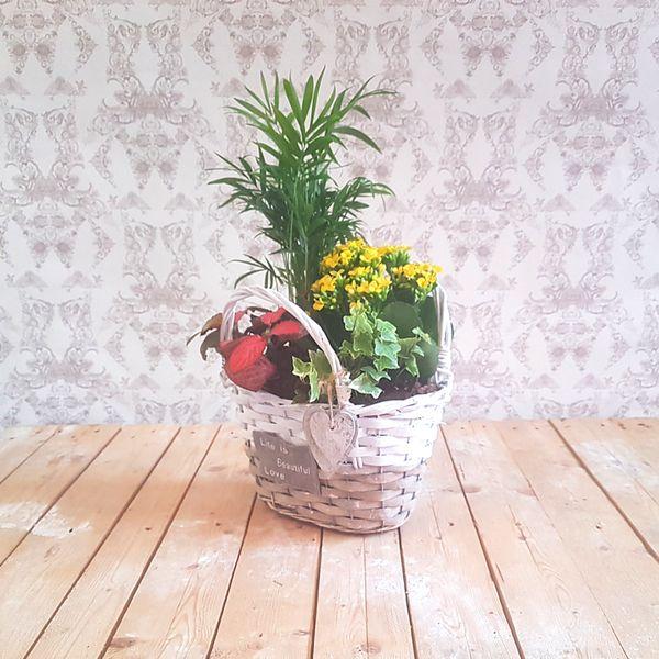 Capazo de Plantas